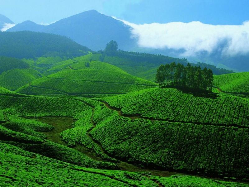Tropical Hills, Munnar