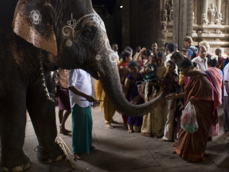 Blessing from Elephant, Meenakshi temple