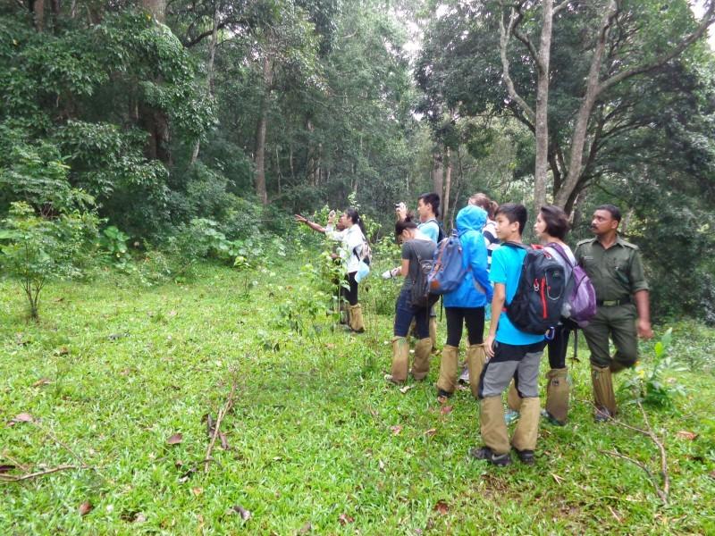Jungle Walk, Periyar NP