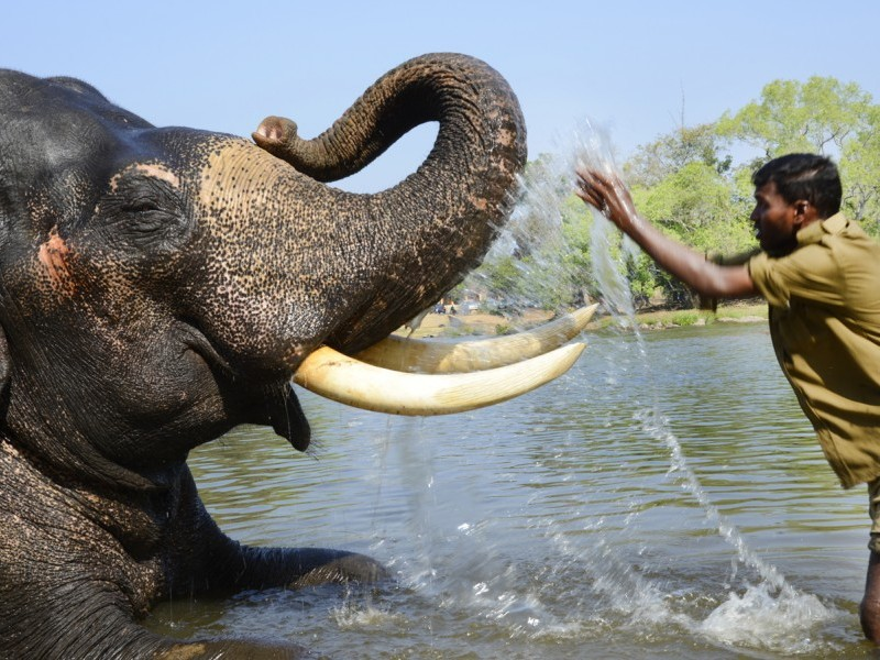 Elephant Camp, Dubare