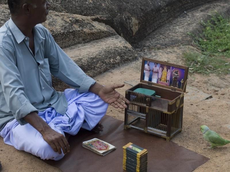 Parrot telling at  Mahabalipuram