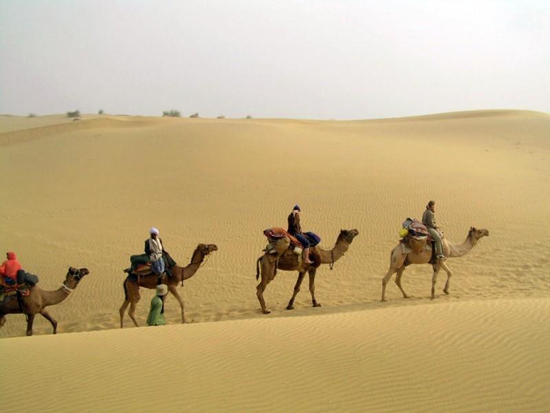 Camel Safari, Rajasthan