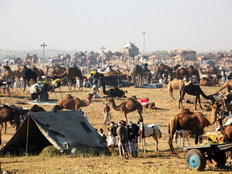 During Pushkar Fair, Pushkar
