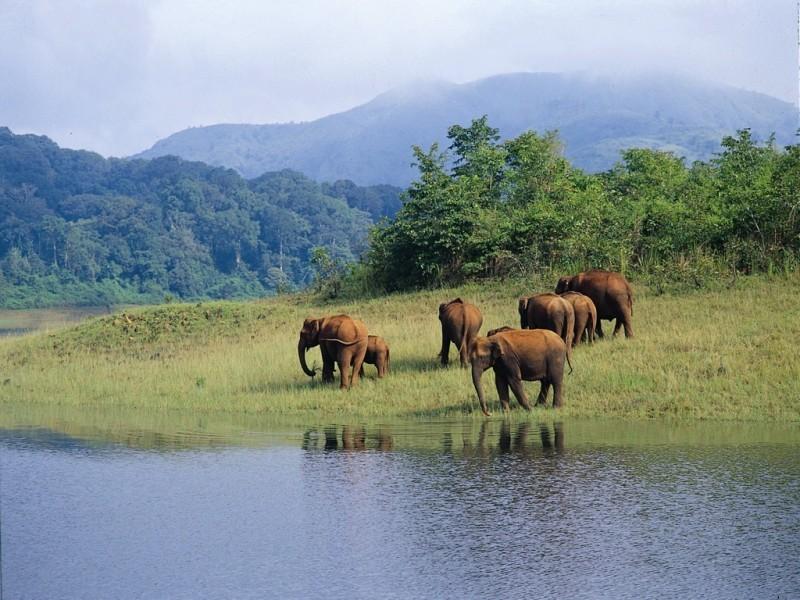 Elephants, Periyar N. P.