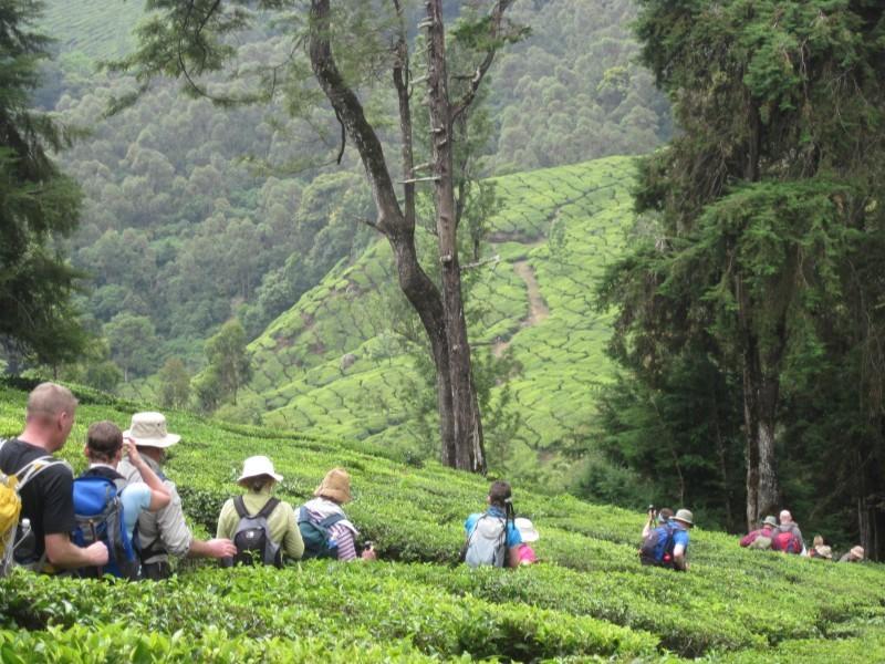Through tea plantation, Munnar, Kerala