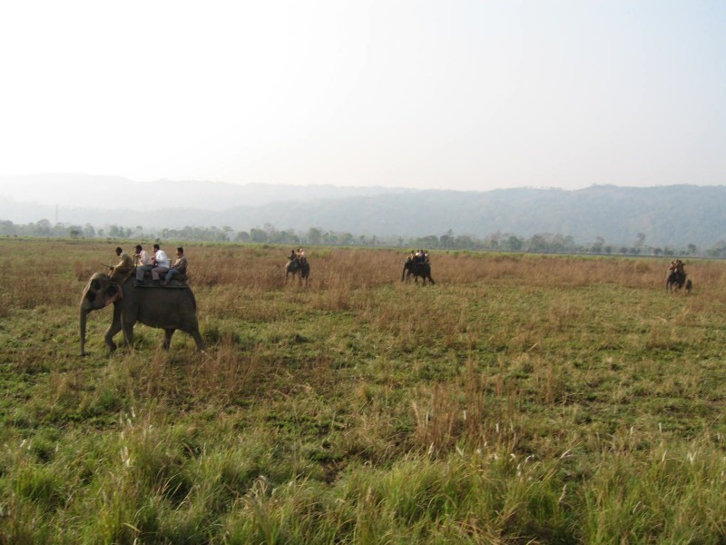 Elephant Safari, Kaziranga