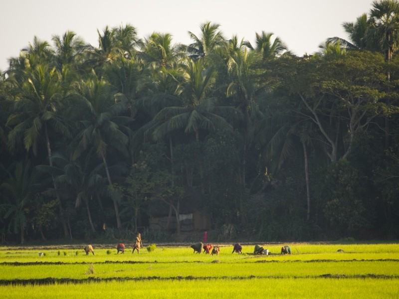 Country farming, Puri