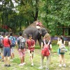 Elephant training camp, Kodanad