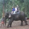 Family enjoying Elephant Ride in Thekkady