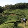Biking through tea estates
