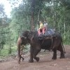 Kids enjoying Elephant Ride in Thekkady