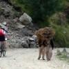 Country roads near Mandi