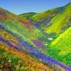 Spectacular Vistas, Valley of Flowers